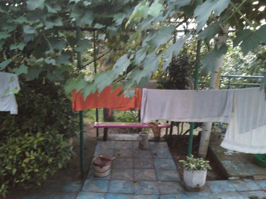 В саду растёт хурма , яблоки , инжир