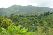 Mountains and Tropical Rainforest