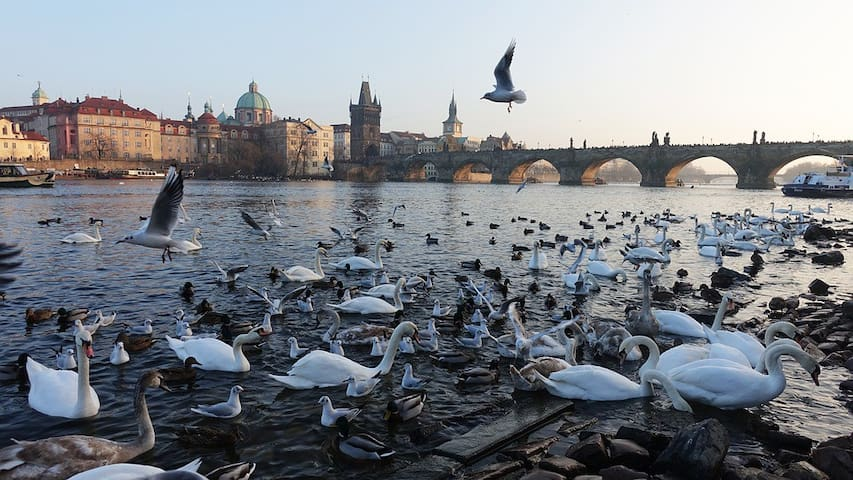 Charles Bridge · Great Location · Free Parking!