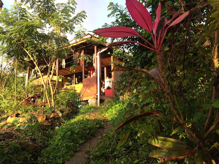 Jungle Off-grid Permaculture Farm & Hostel