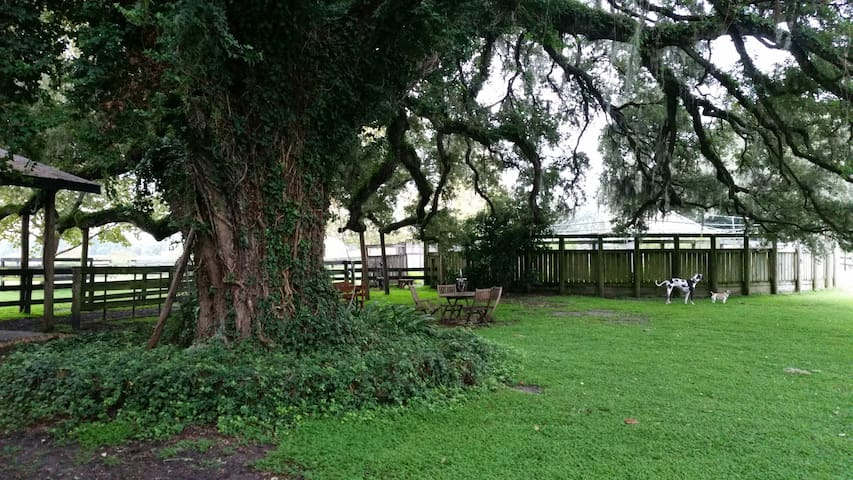 Lovely Barn Studio Apartment - Ocala - Bungalow