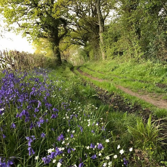 The local paths and bridleways on the doorstep are packed with wild flowers, as we have Organic Farms surrounding our village. There are maps and walking guides provided at the cottage.