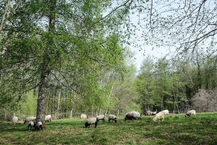 Petite ferme dans le hameau au dessus du gîte. Vue d'un petit chemin.  Walking on a narrow path, passing a small farm in the hamlet above.