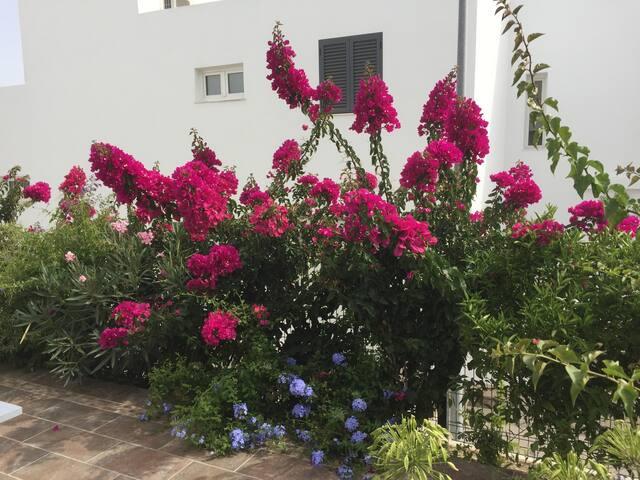 Bepflanzung untere Terrasse
