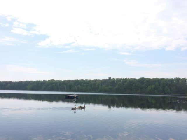 Loons in the morning