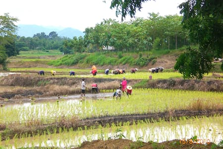 Bungalow in the ricefield