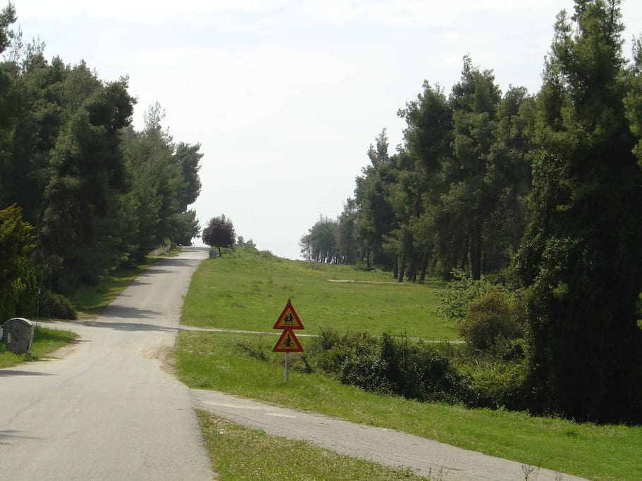 Surrounding area with road through the pine forest