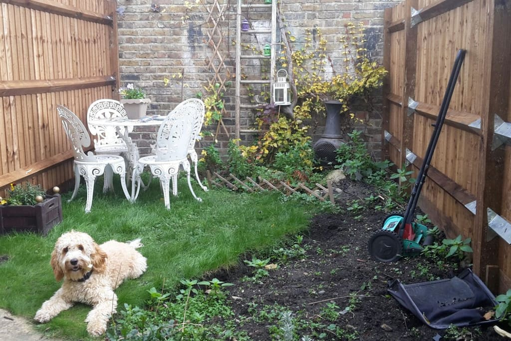 Shared Garden and our dog Frida