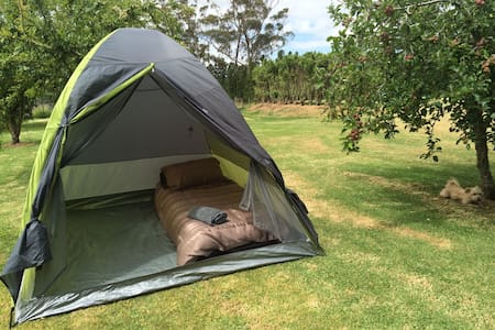 Tent in spacious garden