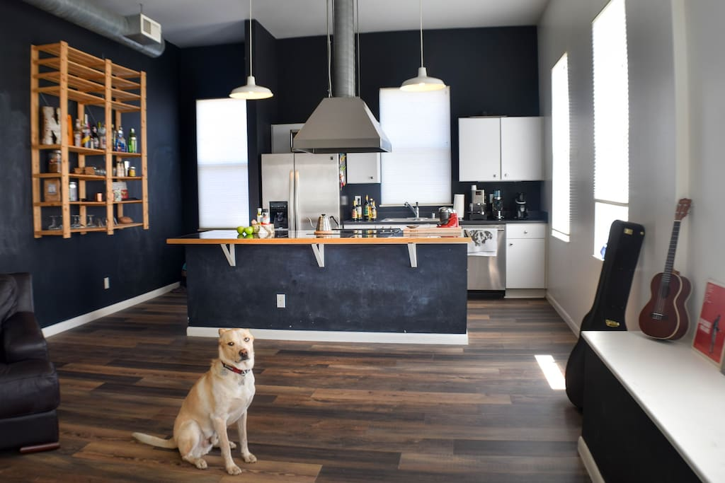 Living Room - Shared - Dog