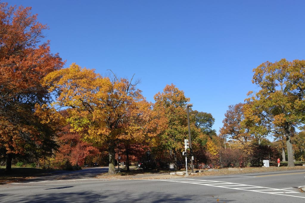 The Emerald Necklace parks are just across the street!