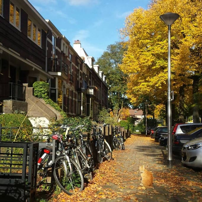 Autumn Streetview with our red cat called Knoet. Parking place available in front of the bnb