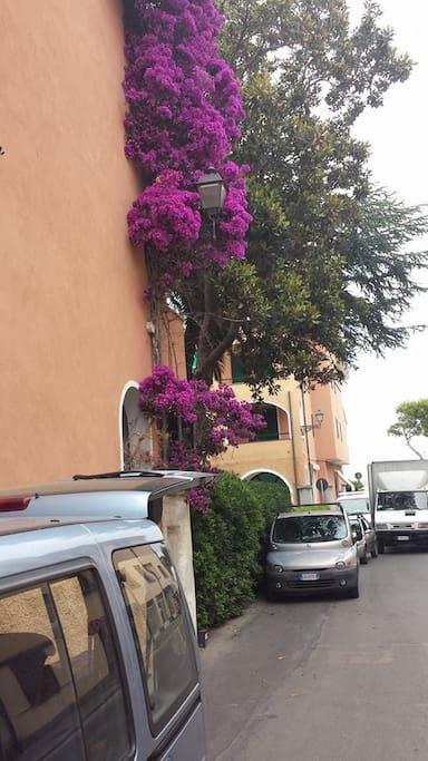Bouganville sulla facciata