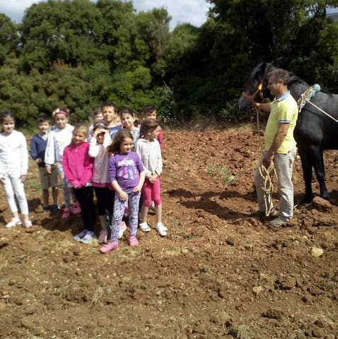 Πολυχώρος Γουρδουπης φαρμα ελαφια αλογα γηπ11χ11