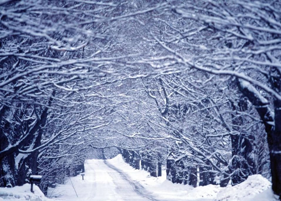 Gorgeous, quiet country getaway. Roads are kept well plowed