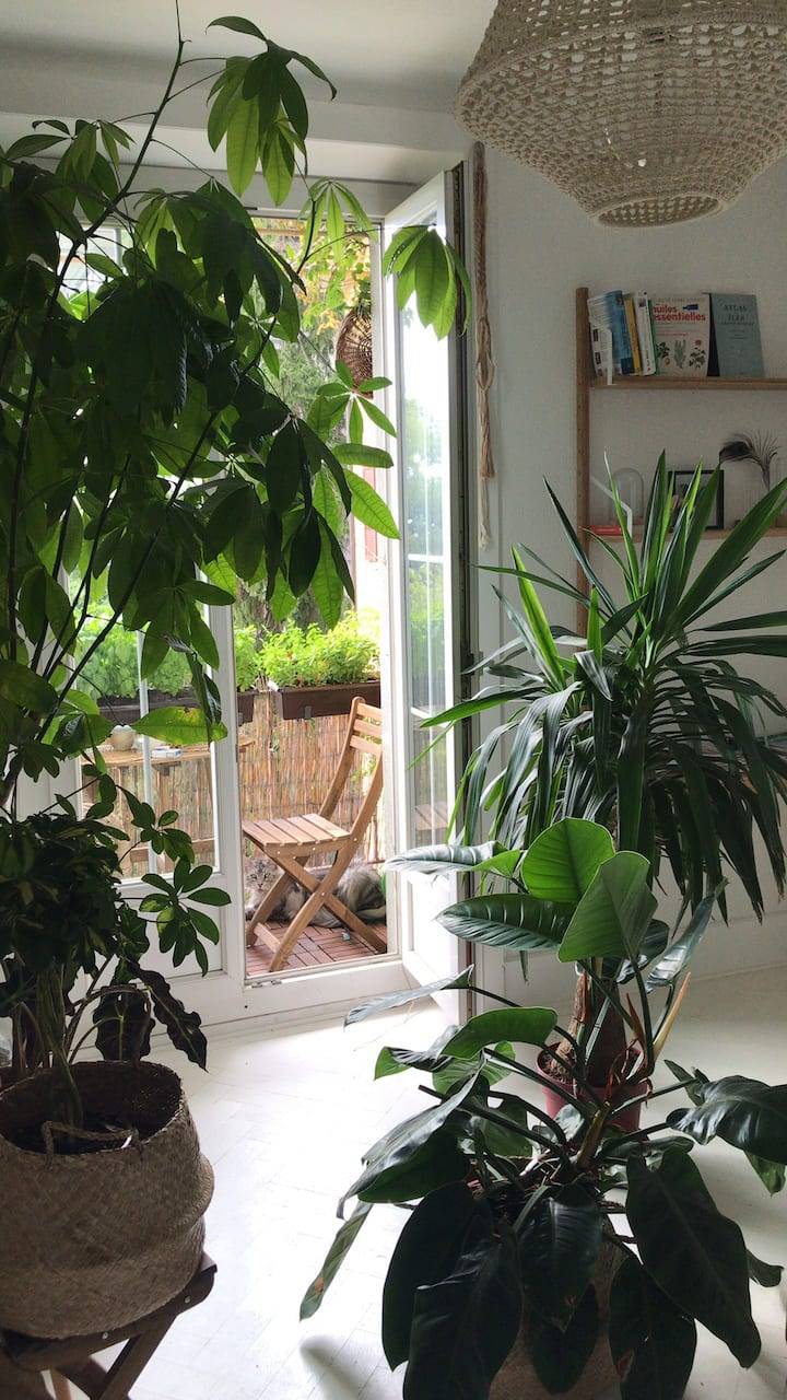 City Centre - Boho cosy flat with Maine coon cats