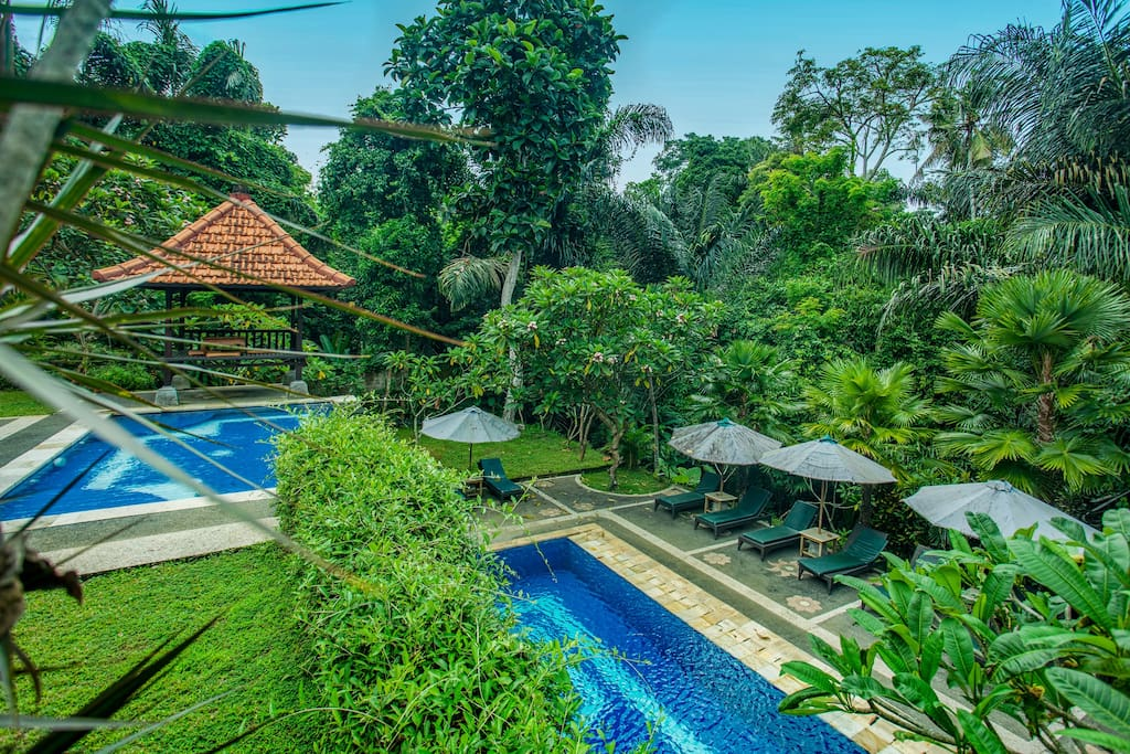 swiming pool and garden view