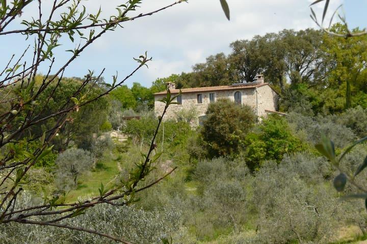 Ferien mitten im Olivenhain