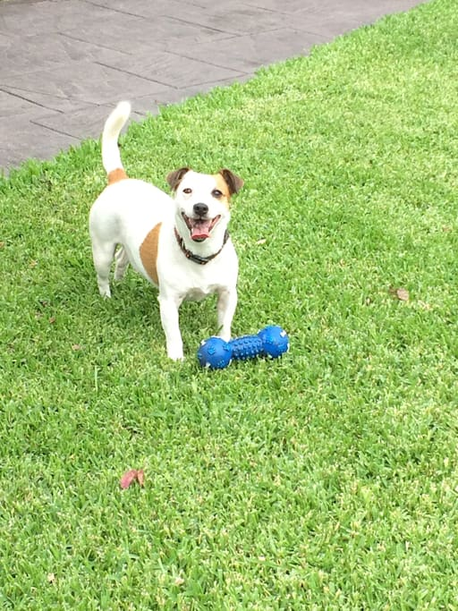 We have a very active Jack Russell called Missy. She is very friendly but can jump up sometimes.