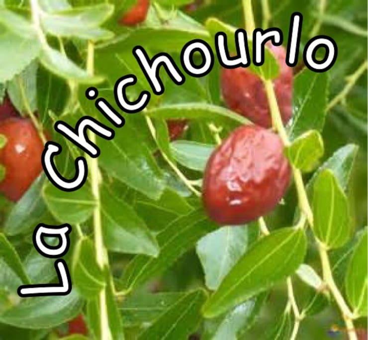 La Jujube, petit fruit en PROVENCE