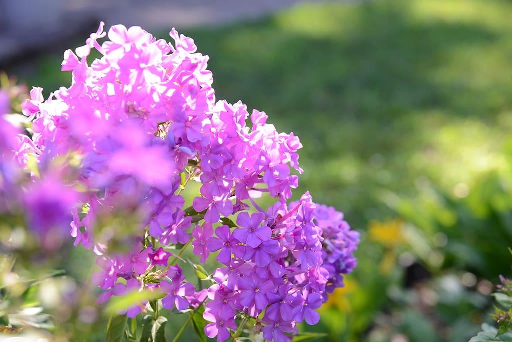 the garden in bloom mid-summer