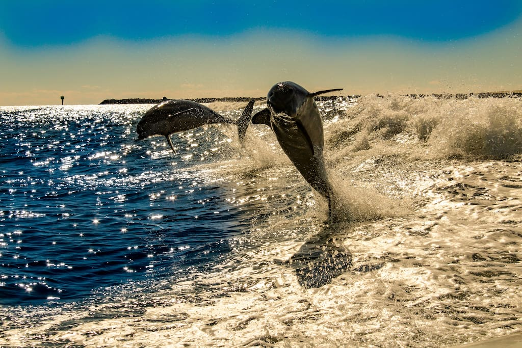 Dolphins Jumping Out of the Water At The Pass in Orange Beach, AL