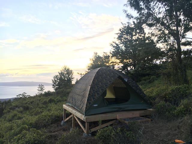 Camp on Haleakala (Maui) - Tent provided - Camo 1