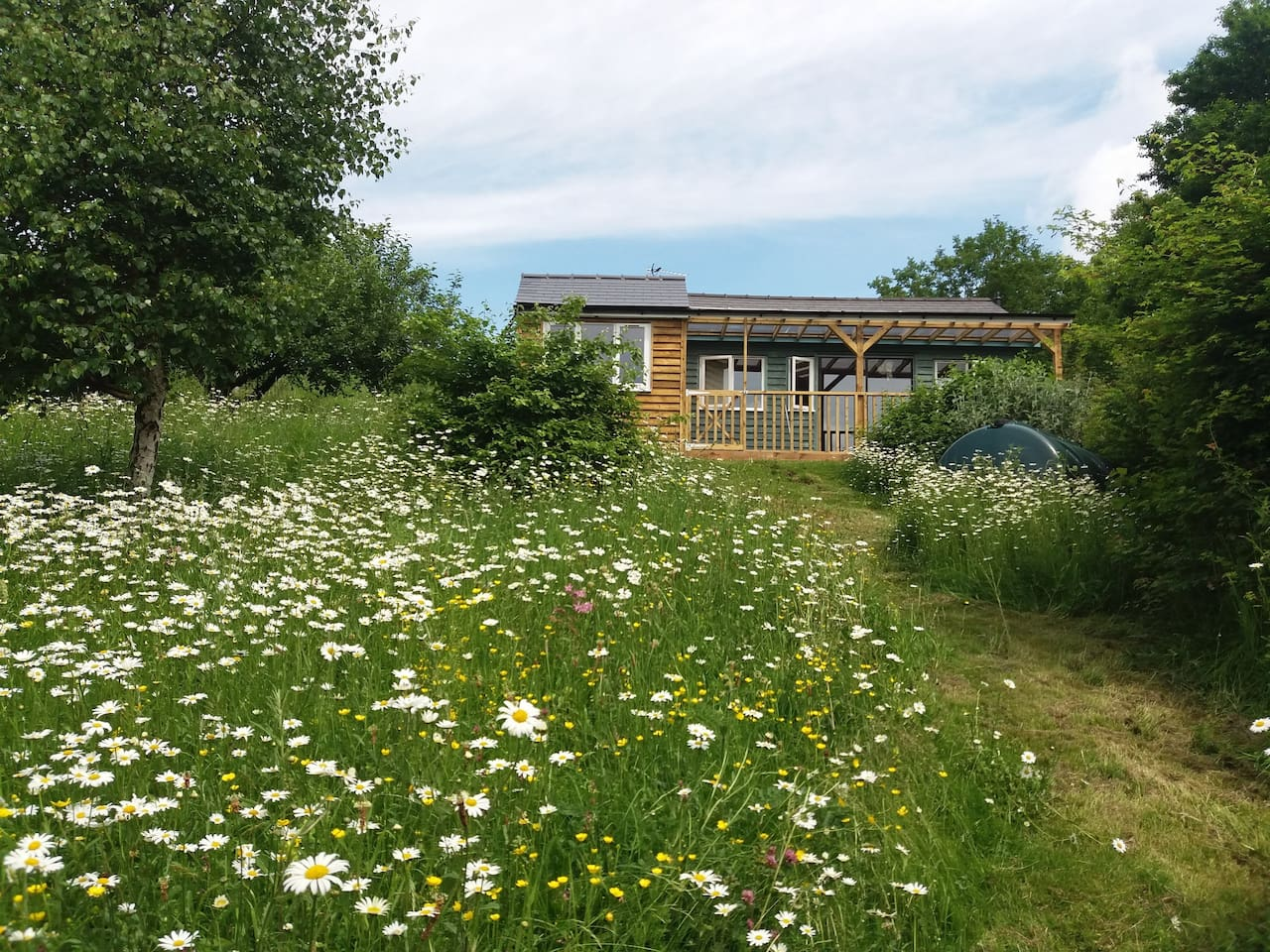 The Garden Cottage overlooks my wild flower garden