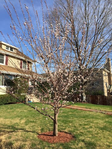 Single or Two bedrooms in a Home - Teaneck - Casa