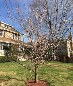 Single or Two bedrooms in a Home - Teaneck - Maison