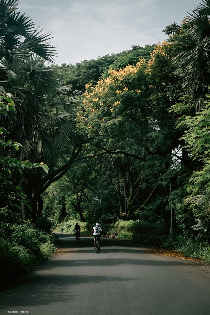 Riding on roads enveloped by greenery