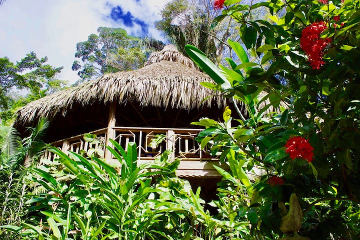 Ceiba Tree Lodge - Pico Bonito National Park