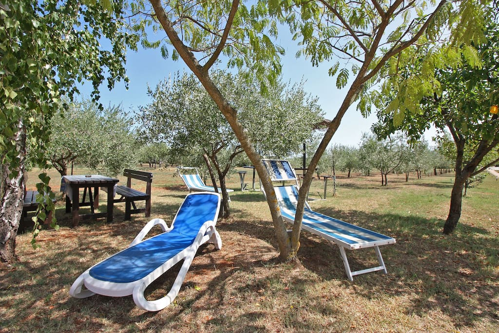 sunchairs in the garden