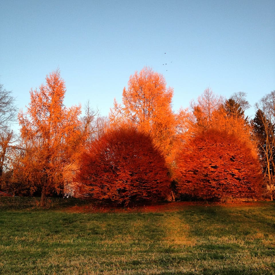 Fall colors at Sweetbrier