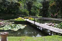 Nuestra casa ofrece espacios verdes, mucha naturaleza  y aire puro.