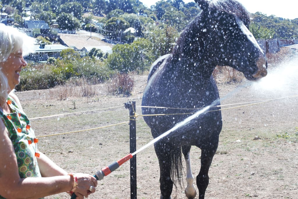 The Black ex race  horse 'Perculator' by name is in his paddock at the end of the garden. He enjoys the company of guests, apples and a nice cool drink from the garden hose.