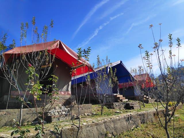 Cozy Camp | Orchard | Bonfire