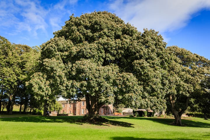 Lunan House Hotel - Hotel Exclusive Use