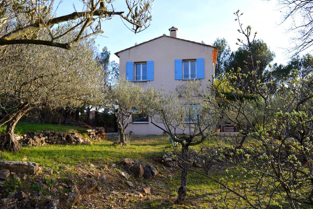 Jardin en restanques plantées d'oliviers