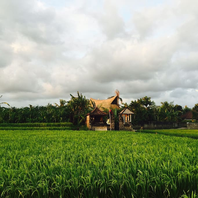View from outside, from rice fields