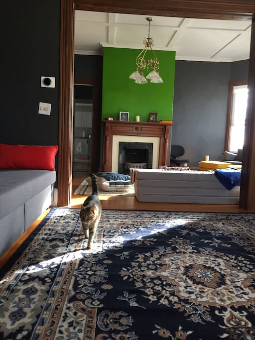 View from the room to common space and Charlie inspecting