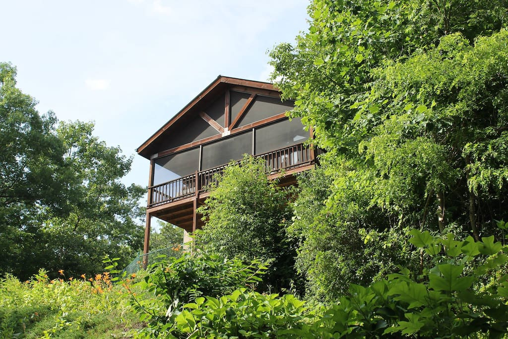 Treetop Hideaway living up to its name in the Summertime.