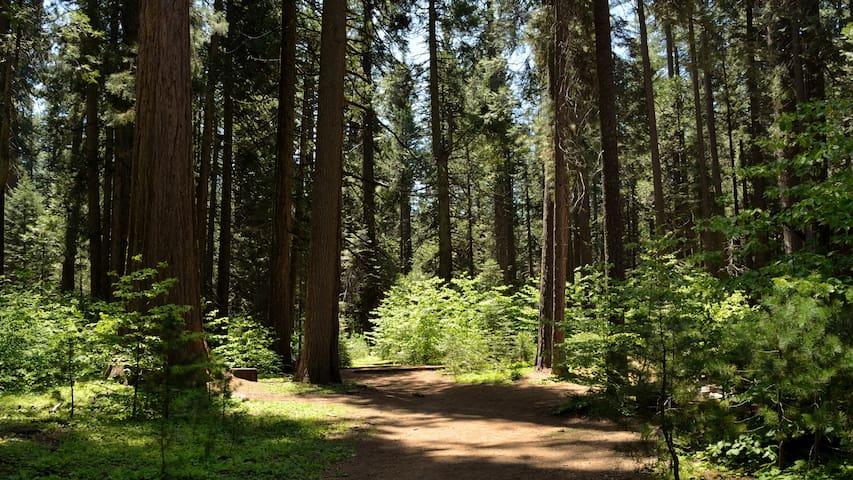 Black Bart-rim trail