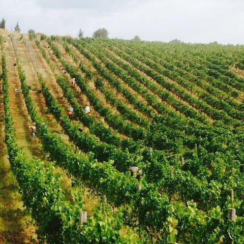 The grape harvest 2016