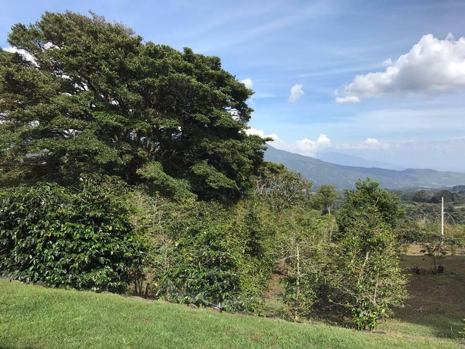 Private coffee farm