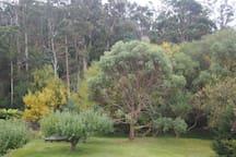 Back garden bordering on rivulet and bushland.