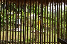 Shrines to the North of the Panorama Room seen through bamboo screen.
