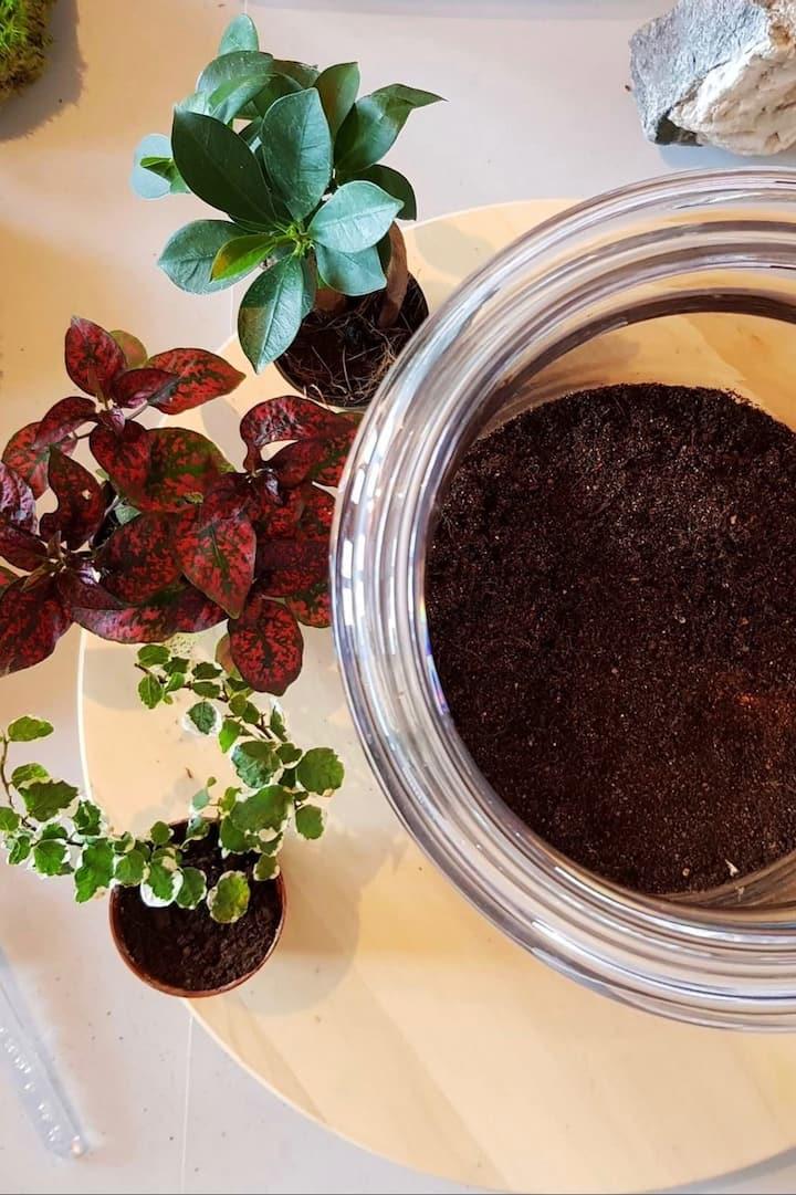 Réaliser un terrarium naturel & autonome