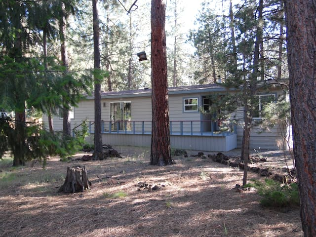 Sanctuary in the pines