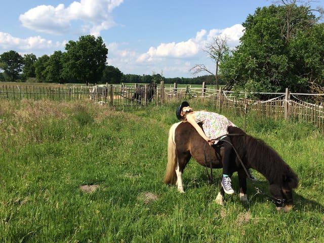 Felder, Wald und Pferde - Entspannung im Wendland! - Lüchow - Apartment
